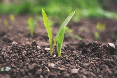 Colorsの畑で収穫&耕起作業